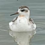 Lancashire Bird Report due October 2019