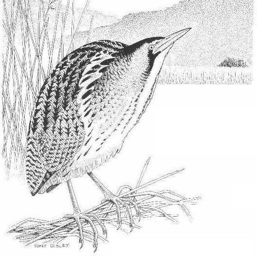 Lancashire & Cheshire Fauna Society